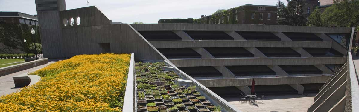 UMN campus green roof.