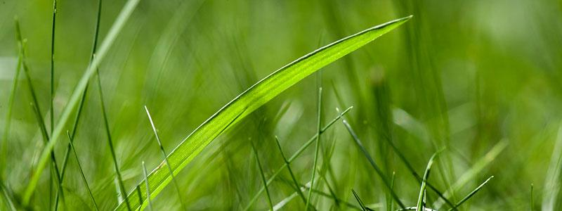 Photo of grass.
