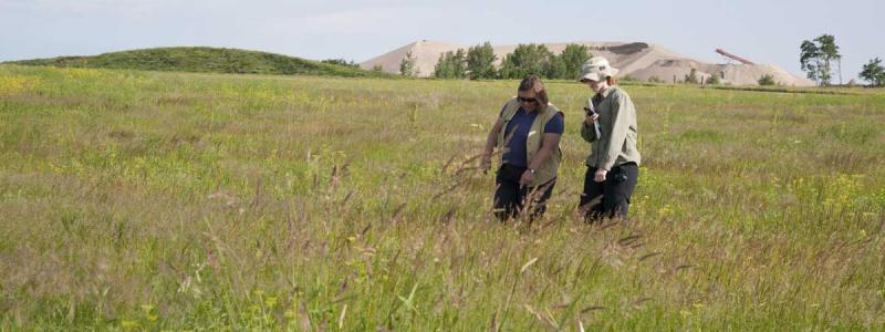 UMN native prairie research.