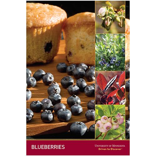 Blueberries poster.