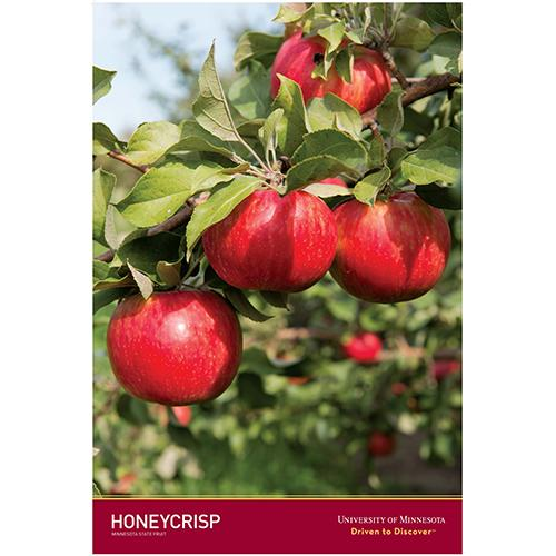 Honeycrisp poster.