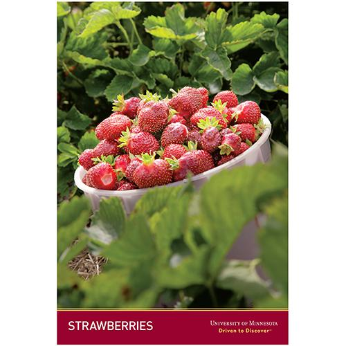 Strawberries poster.
