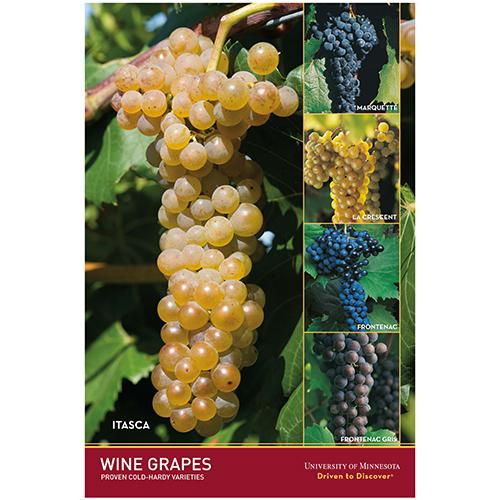 U of M wine grape variety poster.