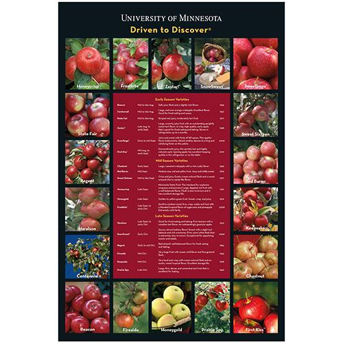 U of M apple varieties with description poster.