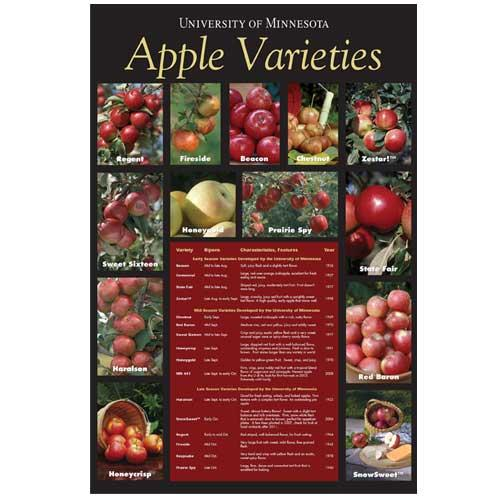 Apple varieties poster.