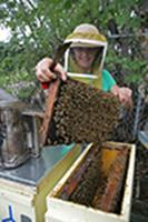 Marla Spivak with bees.