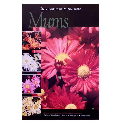 Mammoth mums poster.